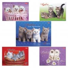 Альбом для рисования, А4, 24 л., спираль, обложка картон, HATBER 'Милые котята', 24А4Всп, A075449